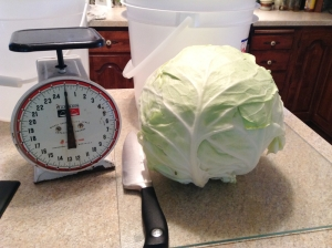 The head of cabbage awaits its execution